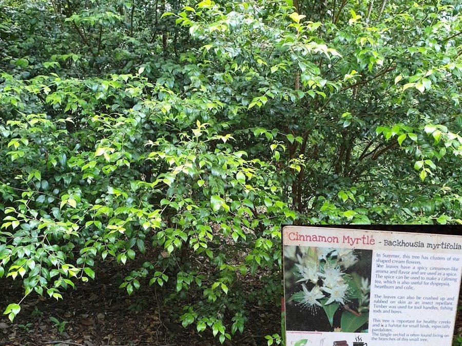 Federal Bush Tucker Garden