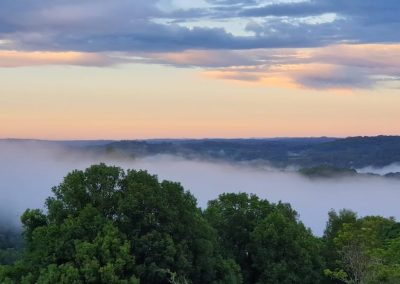 Jan 19 - Morning mist